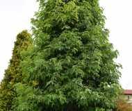 Vivaio: albero