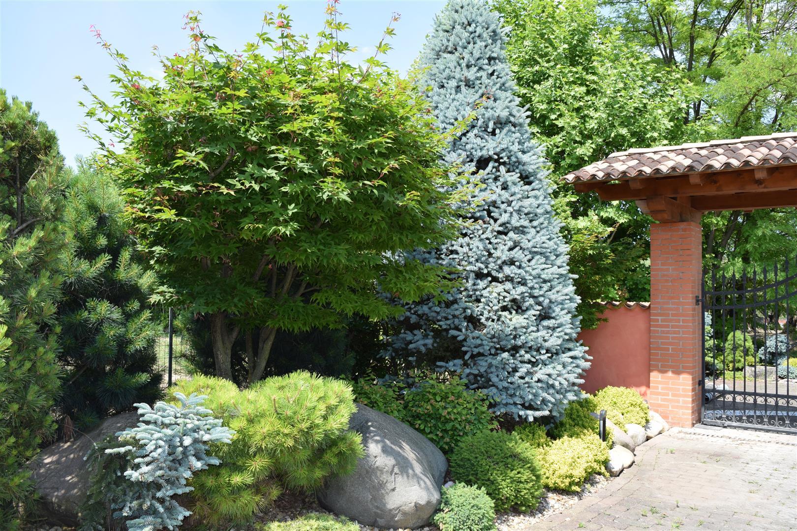 Good aiuola con conifere e arbusti with aiuole con ulivo for Aiuola con ulivo