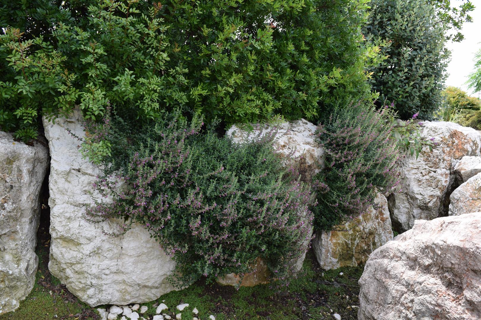 Sassi rocce per usi vari - Rocce per giardino ...