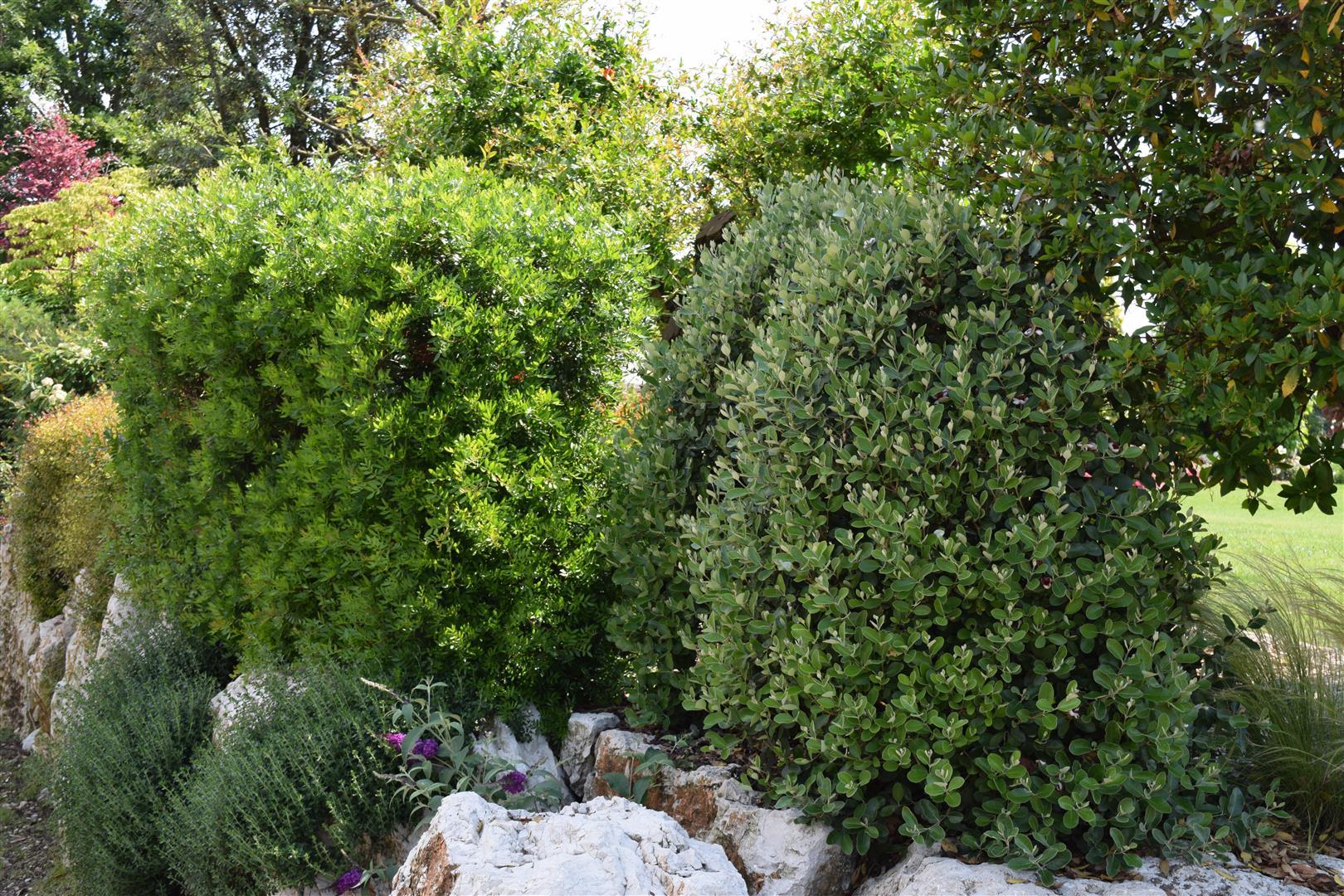 Siepi Miste Da Giardino esempi vari